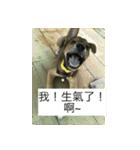 I am funny dog(個別スタンプ:09)