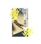 I am funny dog(個別スタンプ:11)