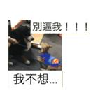 I am funny dog(個別スタンプ:12)