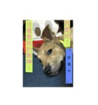 I am funny dog(個別スタンプ:13)