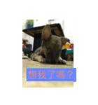 I am funny dog(個別スタンプ:14)