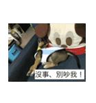 I am funny dog(個別スタンプ:16)