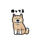 Japanese dog40(個別スタンプ:02)