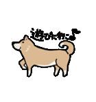 Japanese dog40(個別スタンプ:11)