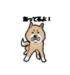 Japanese dog40(個別スタンプ:19)