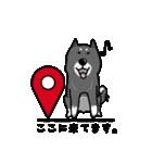 Japanese dog40(個別スタンプ:26)