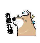 Japanese dog40(個別スタンプ:35)