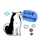 Every Day Dog Husky(個別スタンプ:01)