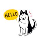 Every Day Dog Husky(個別スタンプ:02)