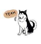 Every Day Dog Husky(個別スタンプ:08)
