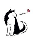 Every Day Dog Husky(個別スタンプ:11)