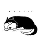 Every Day Dog Husky(個別スタンプ:15)
