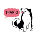Every Day Dog Husky(個別スタンプ:17)