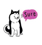 Every Day Dog Husky(個別スタンプ:20)