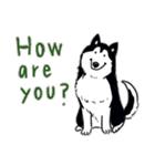 Every Day Dog Husky(個別スタンプ:25)
