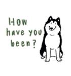 Every Day Dog Husky(個別スタンプ:26)