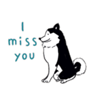 Every Day Dog Husky(個別スタンプ:30)