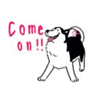 Every Day Dog Husky(個別スタンプ:31)