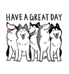 Every Day Dog Husky(個別スタンプ:40)