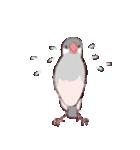 シルバー文鳥のすたんぷす(個別スタンプ:08)