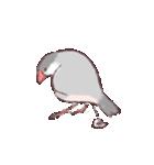 シルバー文鳥のすたんぷす(個別スタンプ:14)