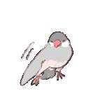 シルバー文鳥のすたんぷす(個別スタンプ:17)