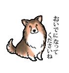 かしこまり犬~ダイバーシティ編~(個別スタンプ:13)