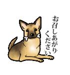 かしこまり犬~ダイバーシティ編~(個別スタンプ:17)