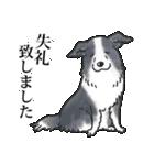 かしこまり犬~ダイバーシティ編~(個別スタンプ:19)