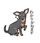 かしこまり犬~ダイバーシティ編~(個別スタンプ:22)