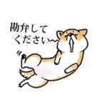 かしこまり犬~ダイバーシティ編~(個別スタンプ:33)