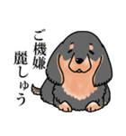 かしこまり犬~ダイバーシティ編~(個別スタンプ:40)