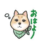 柴犬の顔だけイラストスタンプ(個別スタンプ:01)