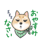 柴犬の顔だけイラストスタンプ(個別スタンプ:02)