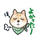 柴犬の顔だけイラストスタンプ(個別スタンプ:13)