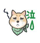 柴犬の顔だけイラストスタンプ(個別スタンプ:16)