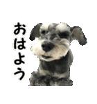 Hello Choko [敬語・挨拶、よく使う言葉](個別スタンプ:01)