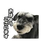 Hello Choko [敬語・挨拶、よく使う言葉](個別スタンプ:02)