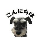 Hello Choko [敬語・挨拶、よく使う言葉](個別スタンプ:04)