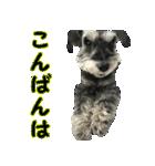 Hello Choko [敬語・挨拶、よく使う言葉](個別スタンプ:06)