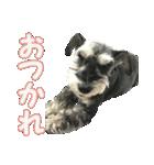 Hello Choko [敬語・挨拶、よく使う言葉](個別スタンプ:09)