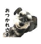 Hello Choko [敬語・挨拶、よく使う言葉](個別スタンプ:10)