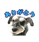 Hello Choko [敬語・挨拶、よく使う言葉](個別スタンプ:11)