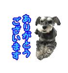 Hello Choko [敬語・挨拶、よく使う言葉](個別スタンプ:12)
