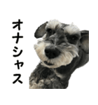 Hello Choko [敬語・挨拶、よく使う言葉](個別スタンプ:14)