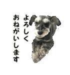 Hello Choko [敬語・挨拶、よく使う言葉](個別スタンプ:15)