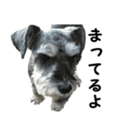 Hello Choko [敬語・挨拶、よく使う言葉](個別スタンプ:16)