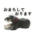 Hello Choko [敬語・挨拶、よく使う言葉](個別スタンプ:17)