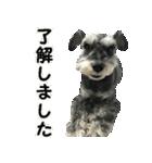 Hello Choko [敬語・挨拶、よく使う言葉](個別スタンプ:19)