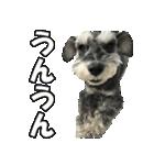 Hello Choko [敬語・挨拶、よく使う言葉](個別スタンプ:20)